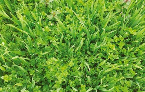 Nezāļu rezistence pret herbicīdiem