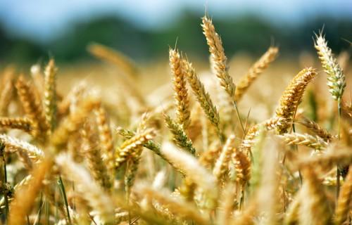 Jaunajiem lauksaimniekiem augustā būs pieejams atbalsts 4,44 miljonu eiro apmērā