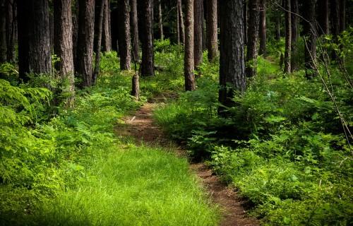 Jaunā Eiropas Savienības meža stratēģija – jauns izaicinājums
