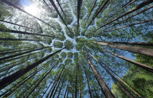 Atbalsts meža platību paplašināšanai un meža dzīvotspējas uzlabošanai