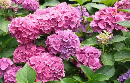 Krāšņi augi, kurus stādīt dārzā nākamajai vasarai