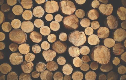 """AS """"Latvijas valsts meži"""" pusgada peļņa - 61,7 miljoni eiro"""