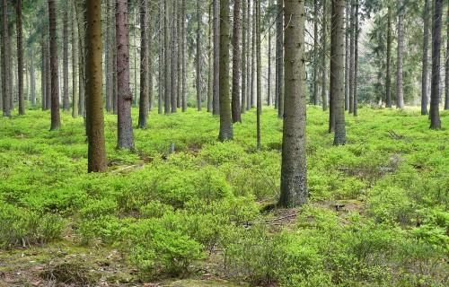 Viss par mežsaimniecības kooperatīviem arī tālmācībā