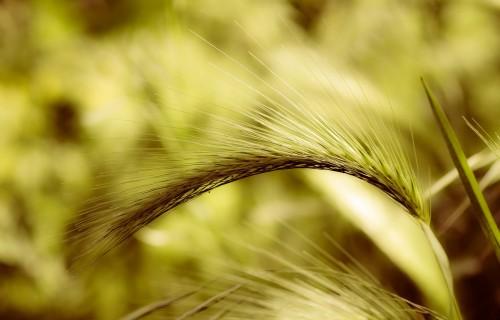 Inovācijas lauksaimniecībā nevar būt luksus lieta