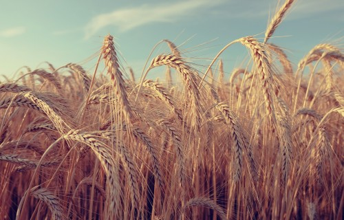 Lielās saimniecības var iesniegt deklarāciju par iepriekšējā gadā izmaksātajām darba algām