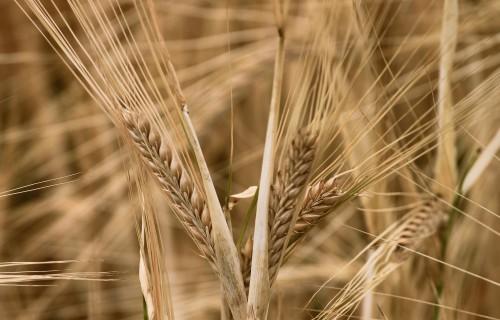 71% saimnieku plāno investēt jaunās tehnoloģijās saimniecības ražīguma paaugstināšanai