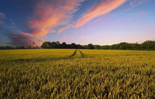 Lauksaimnieki vienotā platībmaksājuma avansu arī šogad sāks saņemt no 16. oktobra