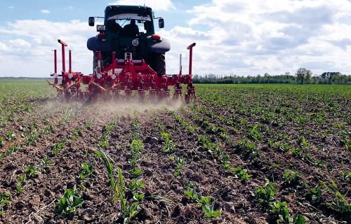 Mehāniskā nezāļu ierobežošana – papildinājums labajai augu aizsardzības praksei
