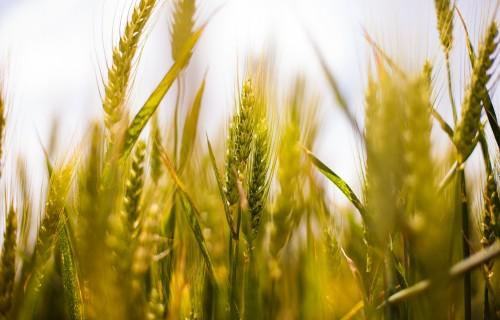 Svalbāras Globālajā sēklu bankā ievietos glabāšanai 153 Latvijā izveidotu lauksaimniecībā un pārtikā izmantojamo augu šķirnes sēklu paraugus