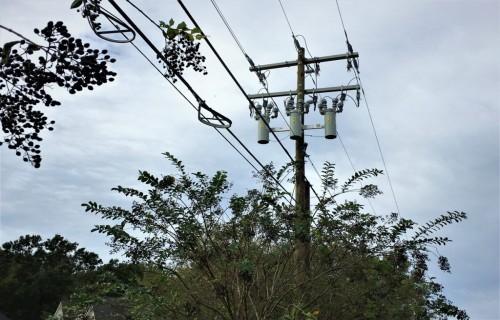 Elektrolīniju trašu attīrīšana no kokiem un krūmiem – kas jāzina, ja tavu īpašumu šķērso gaisvadu elektrolīnija