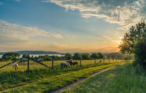 EP: Turpmākajai ES lauksaimniecības politikai jābūt elastīgākai, ilgtspējīgākai un noturīgākai krīzēs