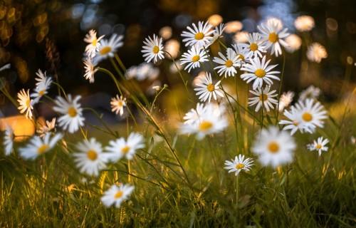 """Latvijas Dabas fonds un """"Swedbank"""" Daugavas krastā kopīgi iesēj dabiskās pļavas augu kvadrātmetru"""