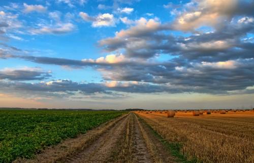 """""""INVL Asset Management"""" izveidojis fondu ilgtspējīgiem ieguldījumiem lauksaimniecības zemē un mežos"""