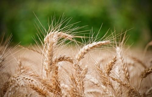Gerhards: EK pēc nepieciešamības jāīsteno atbalsta pasākumi lauksaimniecības un pārtikas preču ražotājiem