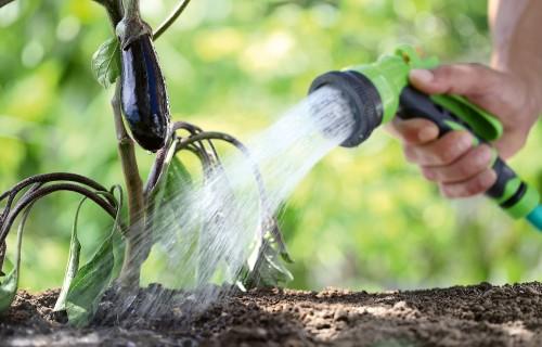 Kā taupīt ūdeni un ar ko laistīt