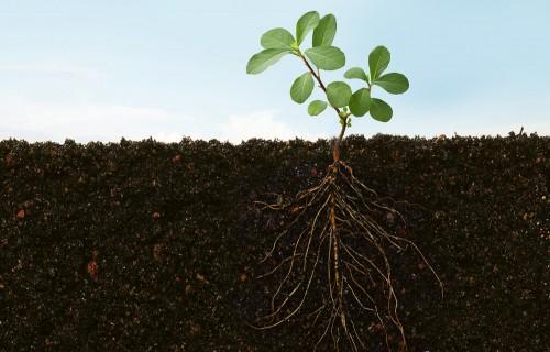 Augsnes auglība aktuāla joprojām