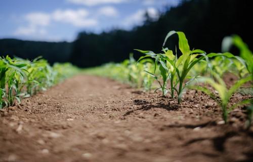 Apgrozāmo līdzekļu garantiju atbalsts kļūst pieejamāks arī maziem lauku uzņēmumiem