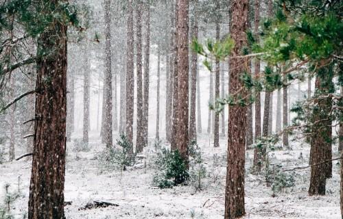 Pārskats par saimniecisko darbību mežā jāiesniedz līdz 1.februārim