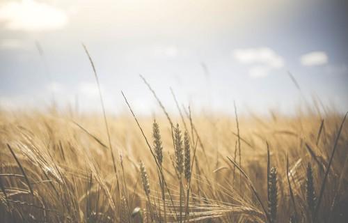 """""""Latraps"""" iepirktās produkcijas daudzums pagājušajā finanšu gadā pieaudzis par 80%"""