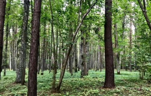 Projektā meklēs risinājumus efektīvai kompensāciju sistēmai mežsaimniekiem