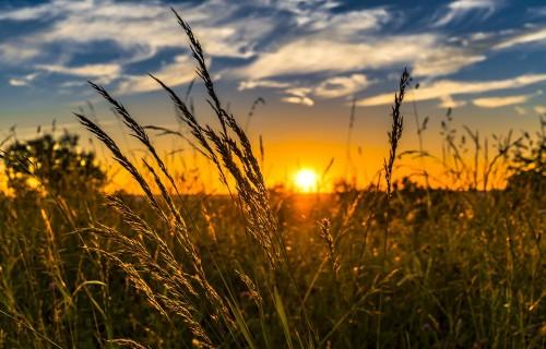 Dabas skaitīšanā bioloģiski vērtīgie zālāji konstatēti 45% apsekoto teritoriju