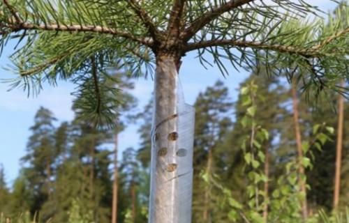 Jaunaudzes jāuzmana no meža dzīvnieku postījumiem