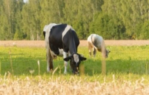 Agrovides pasākumos varēs uzņemties jaunas saistības