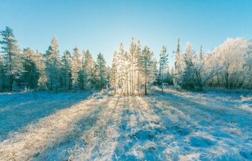 """Meža īpašnieku kooperatīvā """"Mežsaimnieks"""" apvienojušies vairāk nekā 700 biedru"""