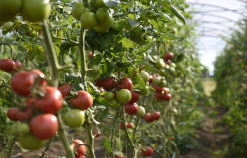 Valsts subsīdijas veicinās lauksaimnieku konkurētspēju un uzņēmējdarbību laukos