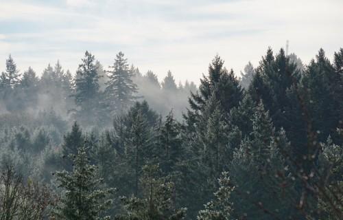 Marta beigās varēs pieteikties atbalsta saņemšanai mežsaimniecībā