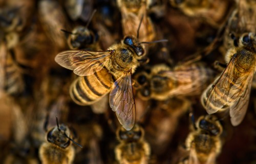 """Latvijā radītais virtuālais asistents biškopjiem """"BeeKing"""" nominēts Eiropas Lauku iedvesmas balvai"""
