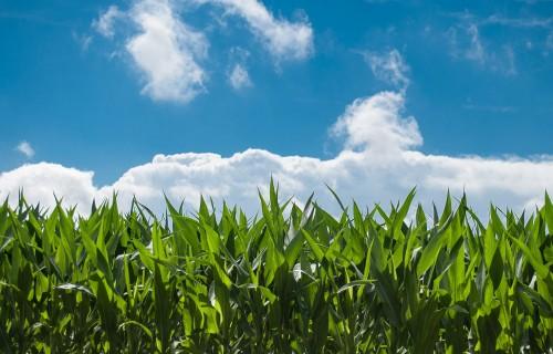 Lauksaimniekiem būs pieejams atbalsts konsultācijām izaugsmes un konkurētspējas veicināšanā miljona eiro apmērā