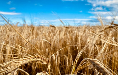 """Kurss """"Bioloģiskās lauksaimniecības pamati"""""""