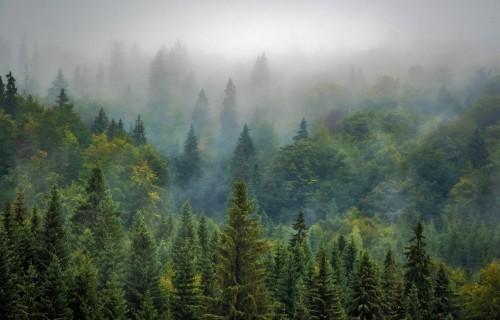 Atklāj pieteikšanos atbalsta saņemšanai mežsaimniecībā