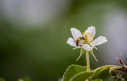 Biškopji: Bites stropos joprojām turpina ziemot