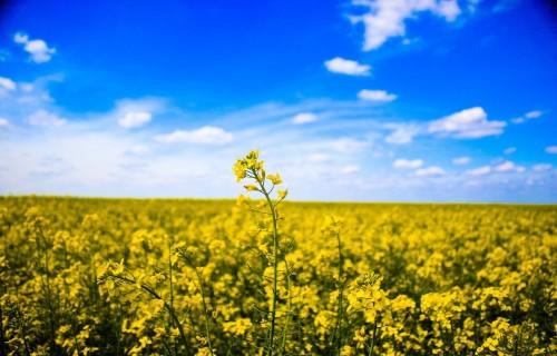 """""""Zemnieku saeima"""": Laika apstākļi ziemājiem līdz šim bijuši labvēlīgi"""