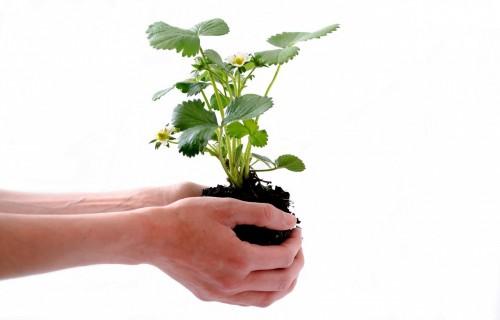 """Pārtrauks saldētas augu izcelsmes produkcijas ievešanu caur robežkontroles punktiem """"Silene"""" un """"Latvijas pasts"""""""