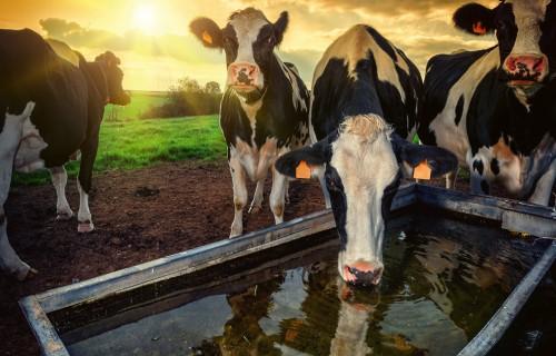 Govju aktivitātes novērošanas programmu attīstība, izmantošanas iespējas un jaunumi