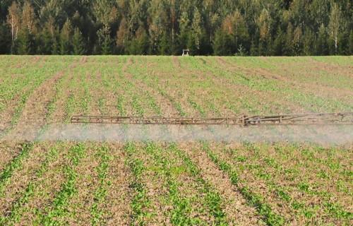 Kā palielināt fosfora lietošanas efektivitāti?