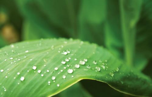 STOP nelegāliem un viltotiem augu aizsardzības līdzekļiem