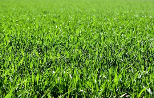 Latvijas Dabas fonds aicina zemnieku saimniecības kļūt par dabisko zālāju atjaunošanas projekta GrassLIFE 2.0 partneriem