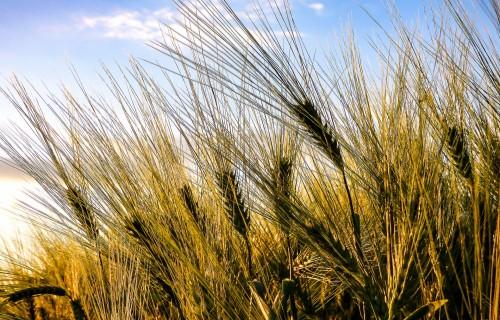 Latvijā ir vieni no viszemākajiem augu aizsardzības līdzekļu lietošanas apjomiem ES