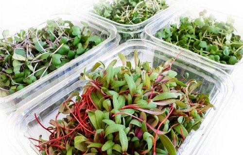 Mikrobioloģiskais piesārņojums mikrozaļumos, svaigos un žāvētos dīgstu produktos un diedzēšanai paredzētās sēklās