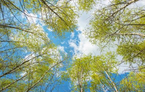 Jaunaudžu kopšana meža vērtības celšanai