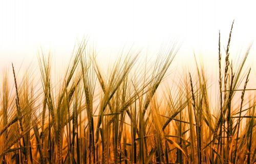 Mazie lauksaimnieki 2021.gadā saņems vienreizēju valsts atbalstu līdz 40 procentiem no apstiprinātās ES tiešmaksājumu summas