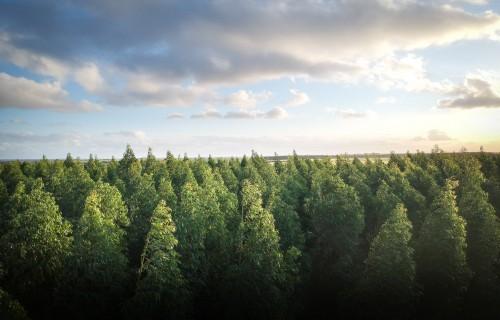 Noskaidrots, kā mežaudžu vecums ietekmē klimata pārmaiņas