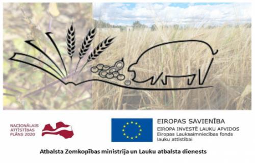 Latvijā audzēta soja + kailgraudu mieži = inovācija cūku ēdināšanā