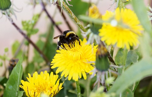 Gribu savu pirmo bišu stropu. AR KO SĀKT?